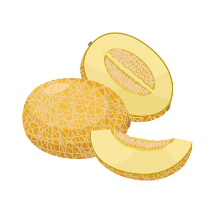 Ripe melon vector illustration isolated on white background. Juicy tropical exotic fruit. Ilustração