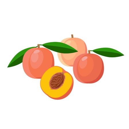 Peaches vector illustration isolated on white background. Juicy tropical exotic fruits. 矢量图像