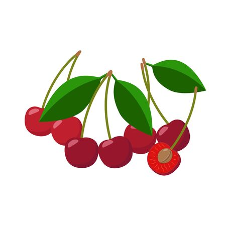 Cherries vector illustration isolated on white background. Juicy red fruits. Ilustração