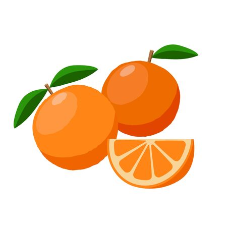 Oranges vector illustration isolated on white background. Juicy tropical exotic fruits. Ilustração