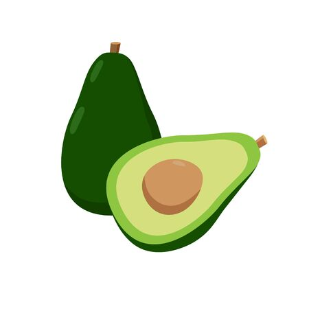 Avocado vector illustration isolated on white background. Juicy tropical exotic fruit.