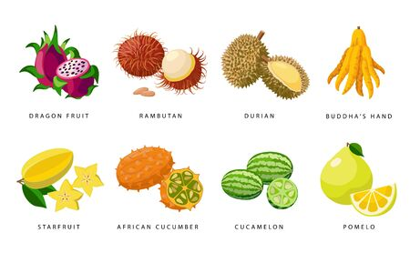 Set of Exotic fruits detailed vector icons, tropical fruits illustrations isolated on white background. Ilustração