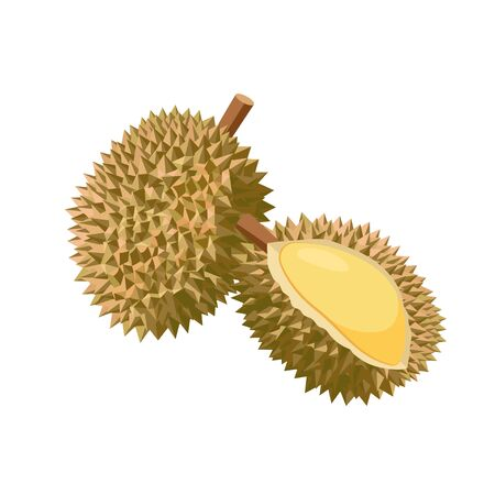 Durian vector illustration isolated on white background. Juicy tropical exotic fruit. Ilustração