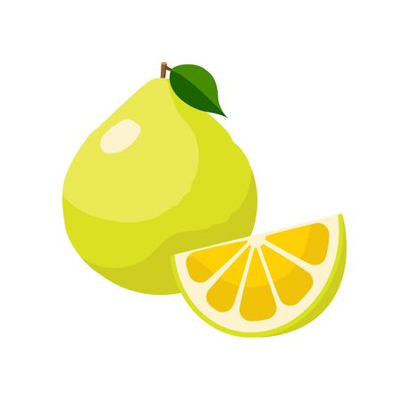 Pomelo vector illustration isolated on white background. Juicy tropical exotic citrus fruit.