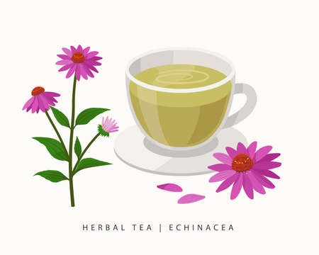 Echinacea herbal tea isolated on white background. Coneflowers Flowering Plant vector botanical illustration. Ilustração
