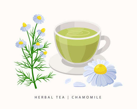 Chamomile herbal tea isolated on white background. Camomile Flowering Plant vector botanical illustration.