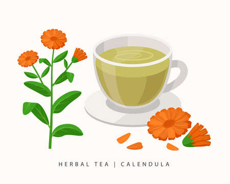 Calendula herbal tea isolated on white background. Marigold Flowering Plant vector botanical illustration.