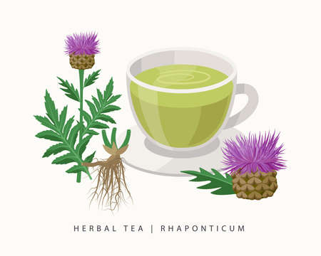 Rhaponticum herbal tea isolated on white background. Maral root Flowering Plant vector botanical illustration. Ilustração