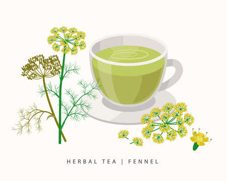 Fennel herbal tea isolated on white background. Flowering Plant vector botanical illustration.