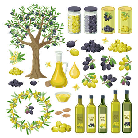 Large collection of olives food, products, olive oil bottles, olive tree, groups of black and green olives, canned, pickled, branches and leaves. Olives infographic elements isolated on white. Ilustração