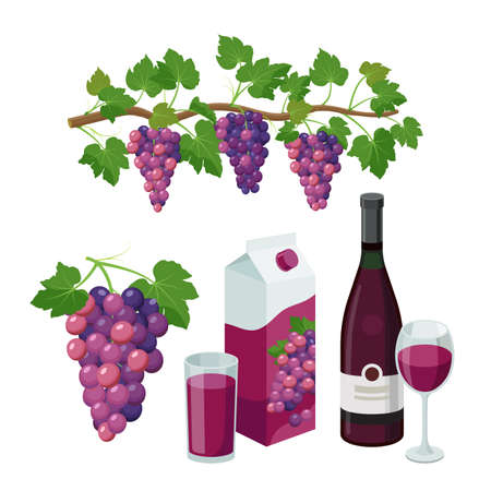 Grape product, vector illustration isolated on white background.