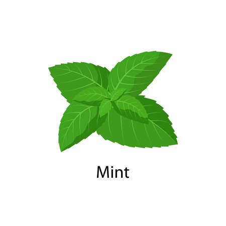 Mint - vector illustration in flat design isolated on white background. Illusztráció
