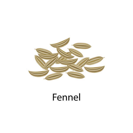 Fennel seeds spice vector illustration in flat design isolated on white background. Illusztráció