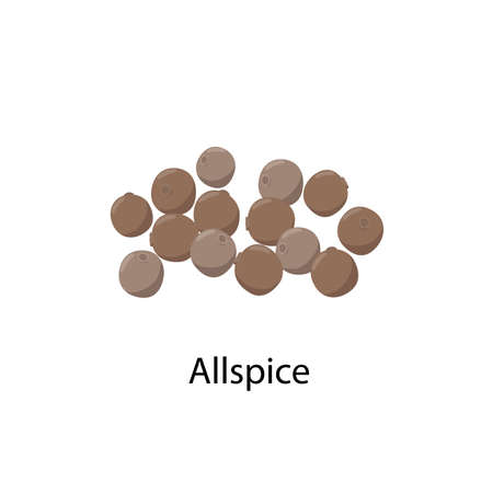 Allspice - vector illustration in flat design isolated on white background. Whole allspice berries vector icon.