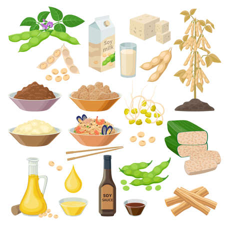 Soybean products, food from soya beans - set of vector illustrations, icons isolated on white background