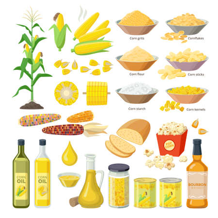 Corn food, set of maize meal, corn oil, corn stickes, cornflakes, pop corn, grits, flour, starch, kernels, plant, bread, bourbon - flat ions isolated on white background.
