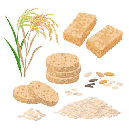 Puffed rice and popped rice food, cakes, rice heap and plant. Set of vector illustrations isolated on white background.