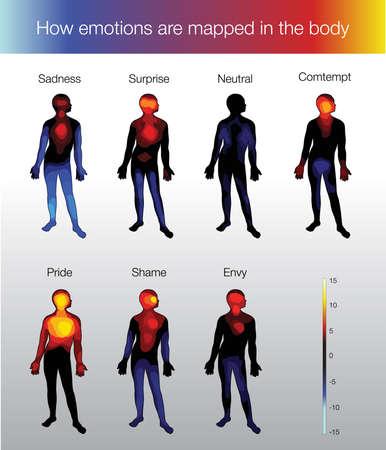hot temper: �C�mo se asignan las emociones en el cuerpo