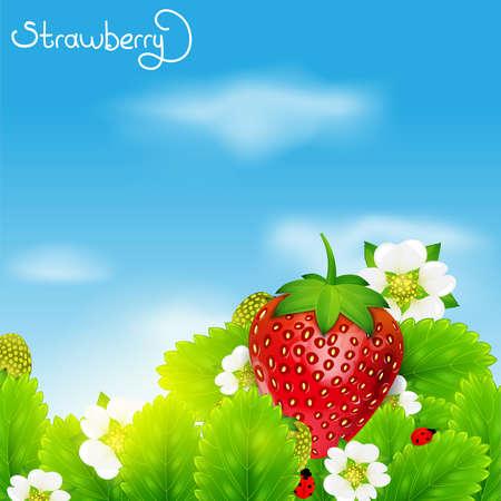 fruit stem: strawberry Illustration