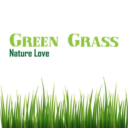 immature: green grass