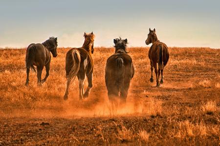 Four running horses kicking up dust on prairie