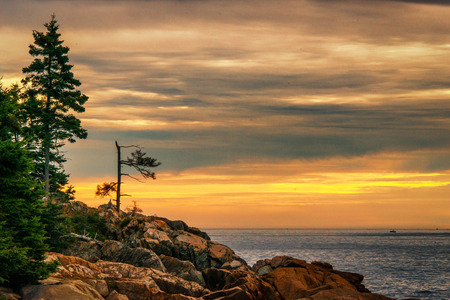 battered trees on coastline of Acadia National Park in Maine at sunrise Stock Photo