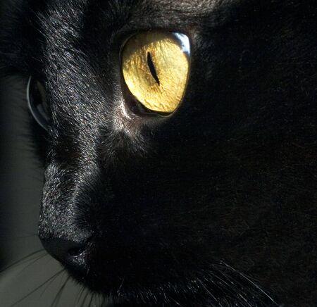 bigodes: black whiskers Imagens
