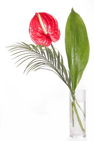 alone red flower in vase