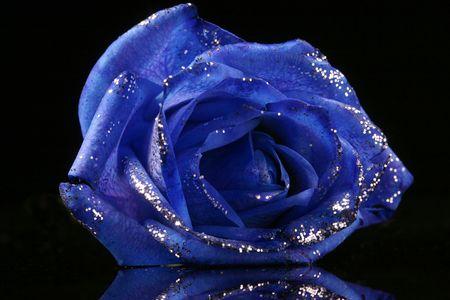 sparkling blue rose on the black background