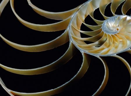 Detailed macro study of the Nautilus shell on a black background