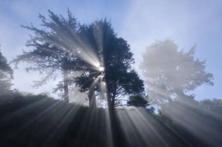 astonishing: Magical and astonishing light emerges from behind a large tree.