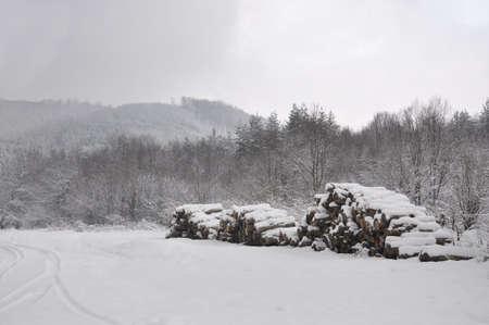Piles of firewood.  Stock Photo