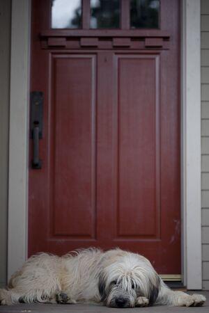 front porch: Un perro perezoso sentado en un porche delantero con una puerta roja