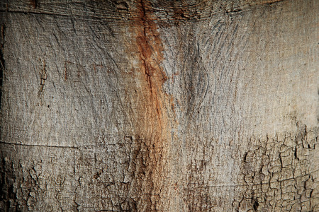 Background of natural wood surface Stock Photo