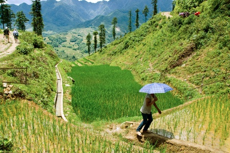 terracing: Sapa, Vietnam Stock Photo