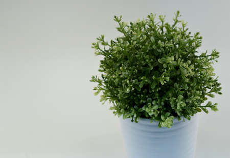 A picture of a round, green plant in a white planter with a white background. 版權商用圖片