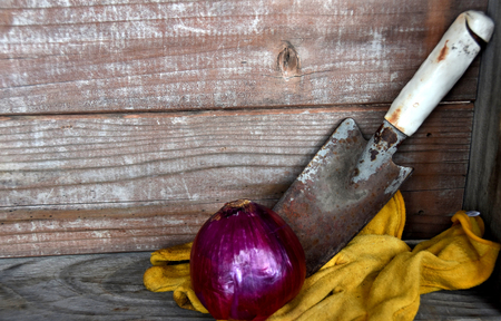 Red onion with gardening tools against wooden background Reklamní fotografie