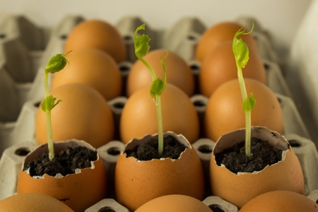 Three plant in egg,Newborn of plant Stock Photo - 17794722