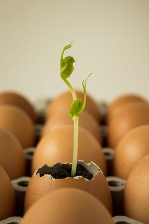 Plant in egg for new life Stock Photo - 17794726