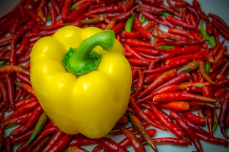 Yellow chili fresh is vegetable on red chili background photo