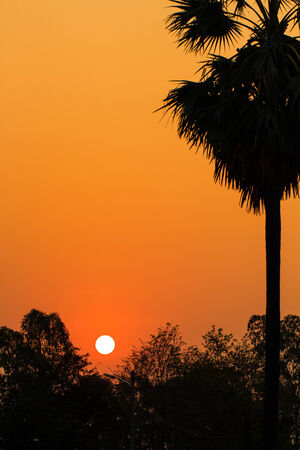 Tropical sunset, palm trees and sun of silhouette photo