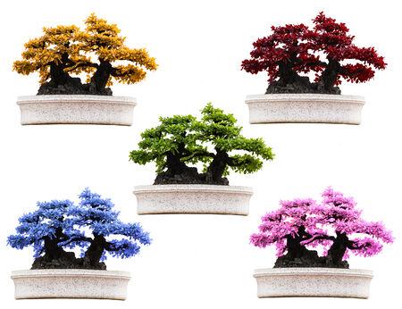 botan: Bonsai trees colorful isolated on white Stock Photo
