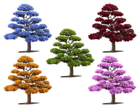 botan: Bonsai trees colorful isolated on white Stock Photo