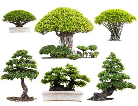 botan: Bonsai trees isolated on white