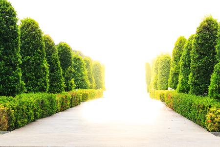 経路と果樹園