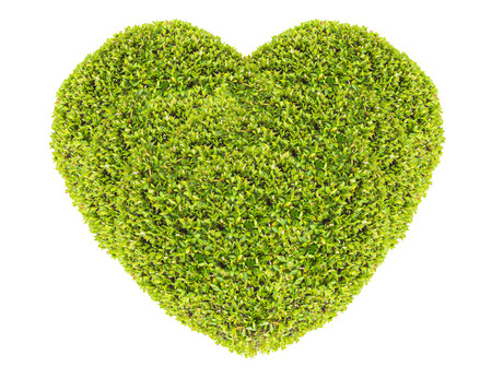 Grass and plants, small green heart. During the Valentine season. on white background photo
