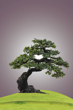 botan: Bonsai tree on green grass