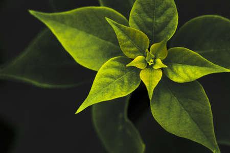 assort: Rim light of the leaves Stock Photo