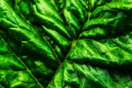 grune: Texture of dark green leaf