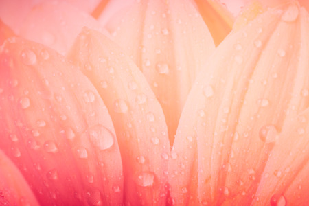 Bloemblaadjes, macro op bloem, prachtige abstracte achtergrond Stockfoto